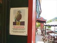 Берегись попугаев