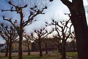 Стремные деревья на центральной площади Лунда