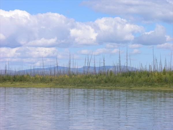По берегам Учура сплошь и рядом горельник.