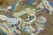 Куча выброшенной рыбы в реке