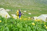 5,11 Желтые цветы альпийских лугов