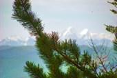 Кедр и горный горизонт