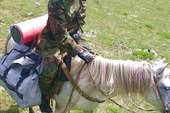 Янтарь и её конь