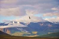 Вело Алтай 2011 путешествие на плато Укок