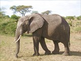 Килиманджаро 2009 январь