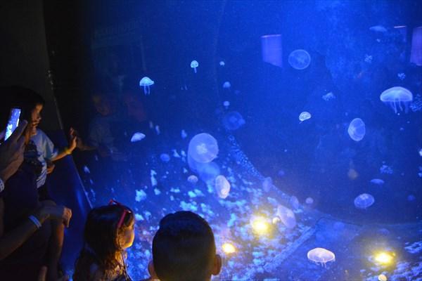 Океанариум Cretaquarium