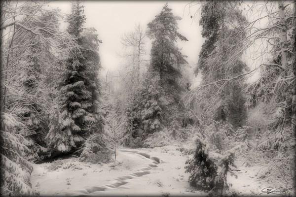 В поисках снега…
