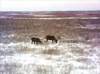 Тундра и заполярный Урал около Карского моря.