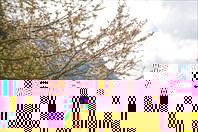 Повсюду цветущие деревья