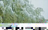Листва под снегом