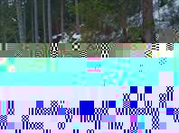 По узкой тропинке в снегу
