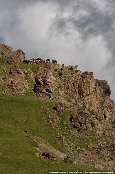 Лошади на скалах