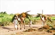 03-Судан-2