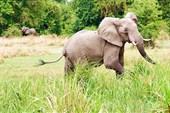 Веселый слон