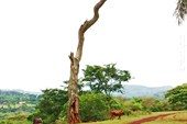Дерево на берегу Нила