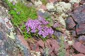 Цветы на Терском берегу