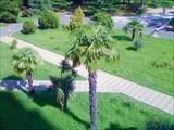 Пальма, солнце