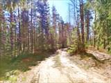 Хорошие дорожки в сосновом лесу