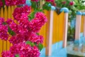Цветочки в чужом огороде