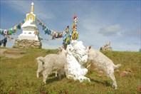 Из Тувы в Монголию