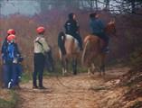 Кони,люди ... и туман