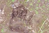 Мишка косолапый по тундре идет