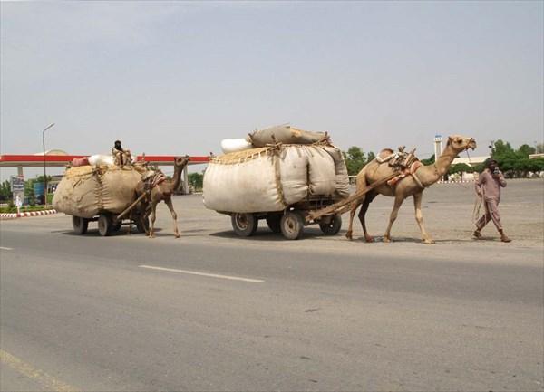 На верблюжьем приводе