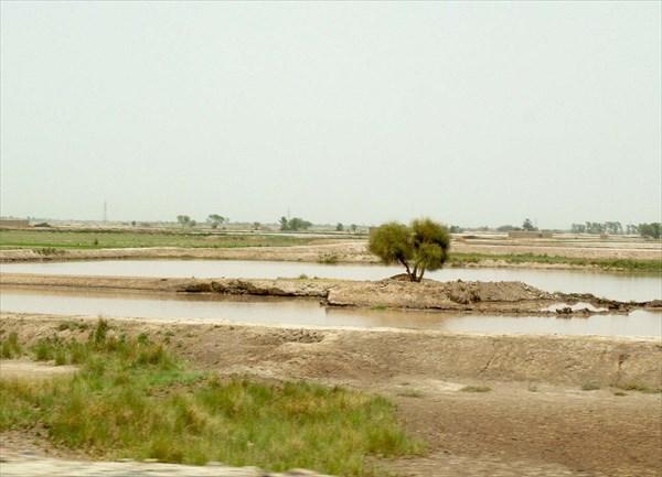 Затопленные рисовые чеки