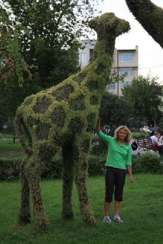 жирафы в Сибири