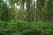 Лес (на пути к Жуково)