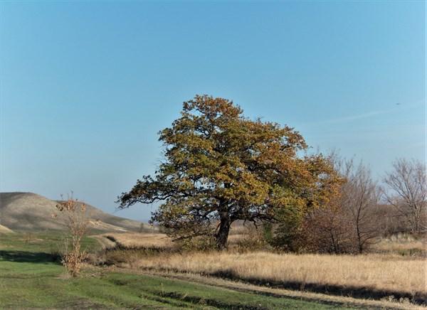 Луганская степь. Дерево желаний.