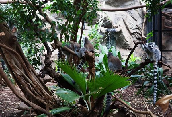 Зоопарк12