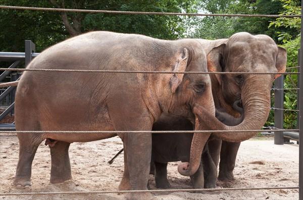 Зоопарк22