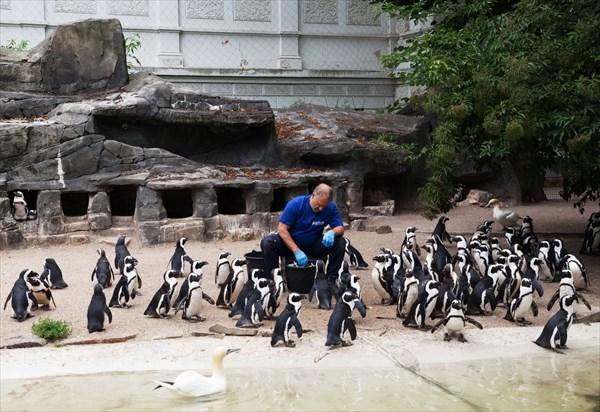 Зоопарк26