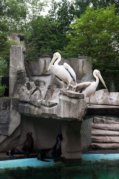 Зоопарк37