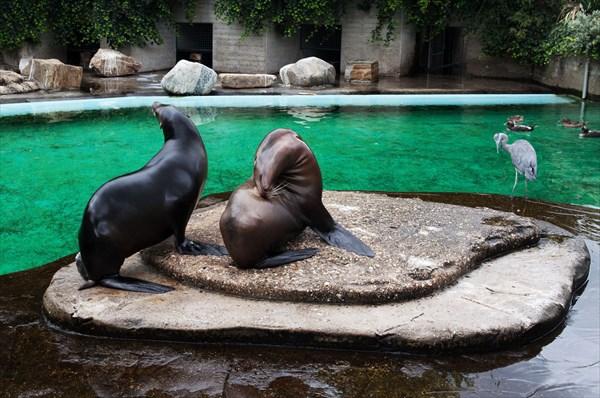 Зоопарк43
