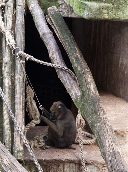 Зоопарк66
