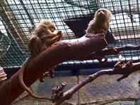 Зоопарк11