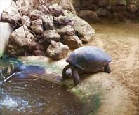 Зоопарк33