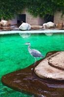 Зоопарк38