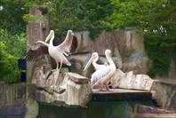 Зоопарк40