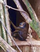 Зоопарк67