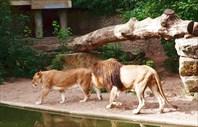 Зоопарк80