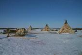 Стойбище в Байдарацкой тундре