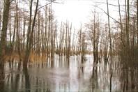 В плену Браславских озер