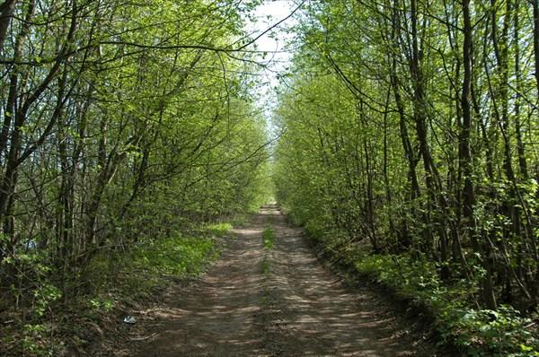 Дорога вдоль Староладожского канала от Нижней Шальдихи к Лаврово