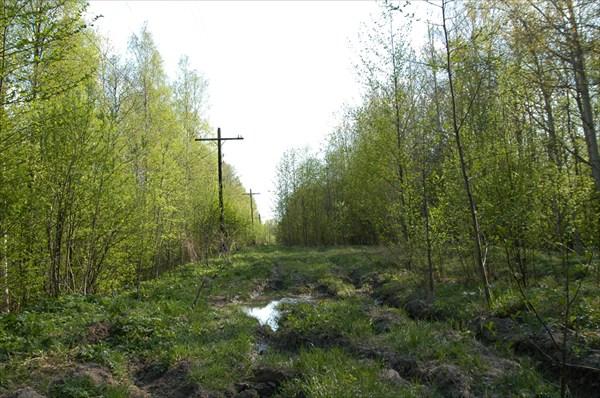 Дорога Черное - Белые Озерки