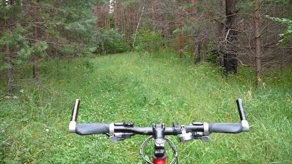Начало лесной дорожки после п. Игрищи
