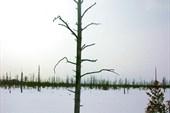 Растительность Рдейского болота