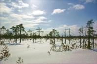 Пейзажи Рдейского болота